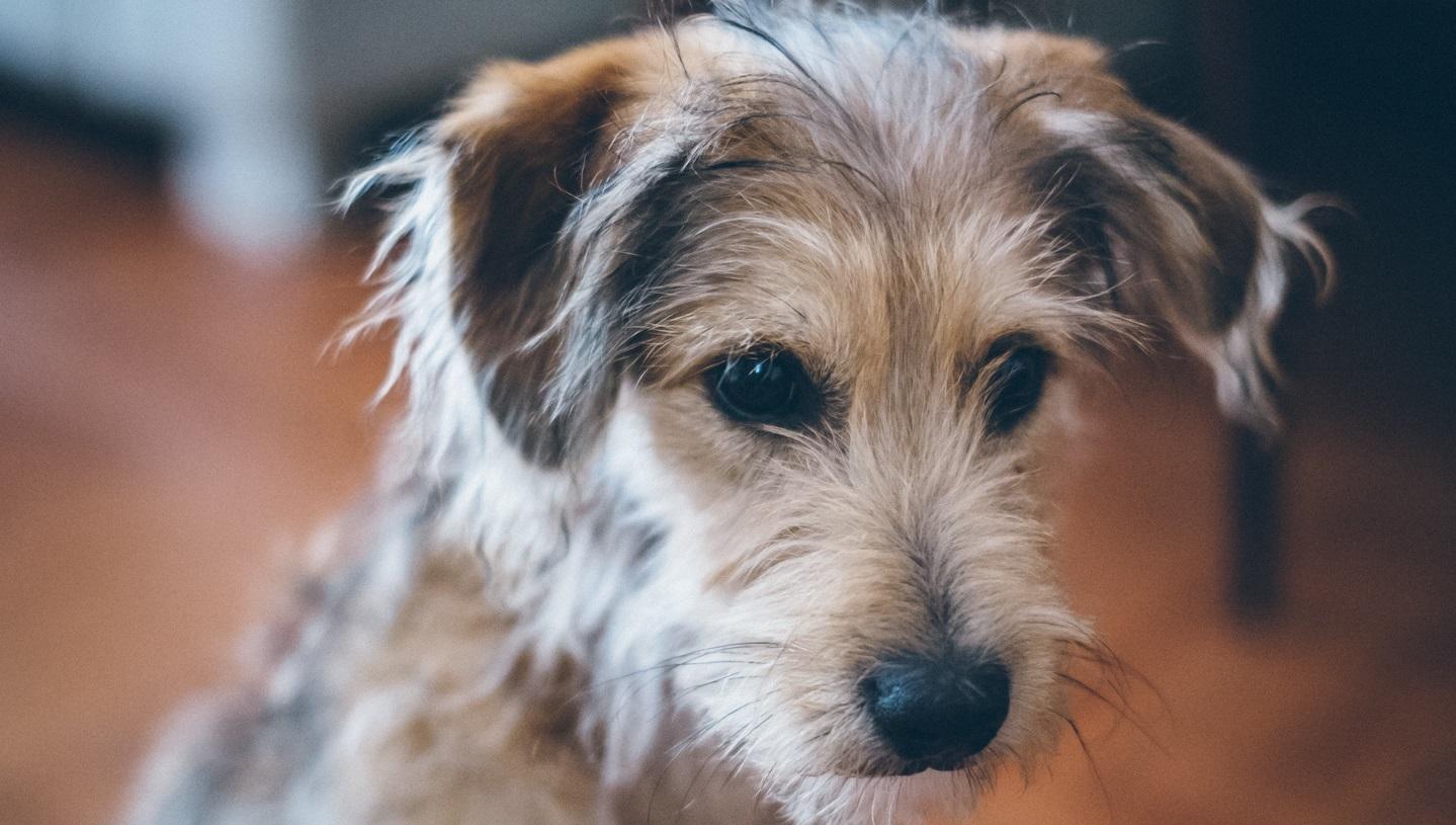 Не нужно надеяться только на закон – Фонд Брижит Бардо о защите животных в Казахстане