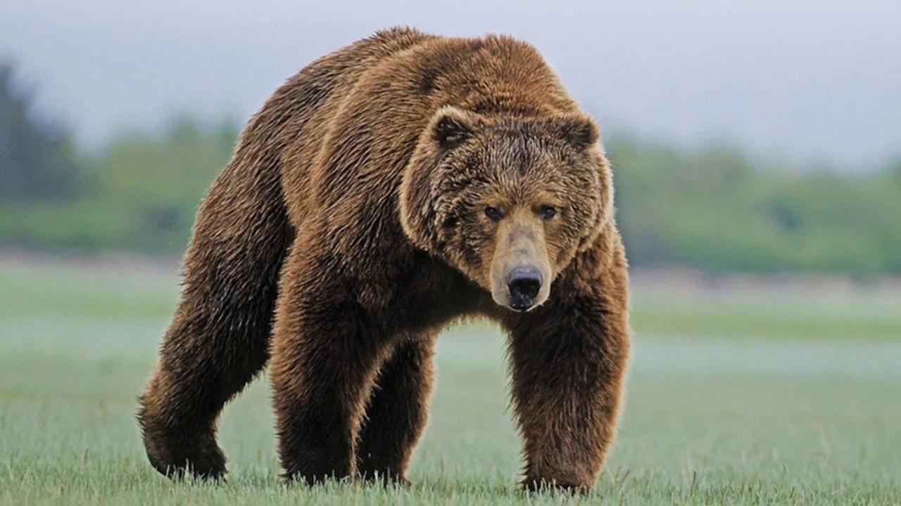 Причины исчезновения редких животных и растений назвали эксперты